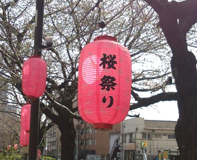 千川通り桜並木2