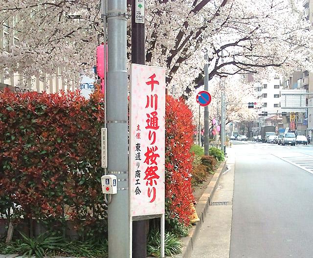 千川通り桜並木