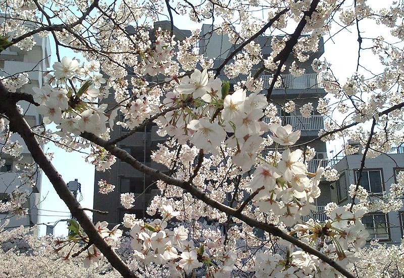 江戸川公園3